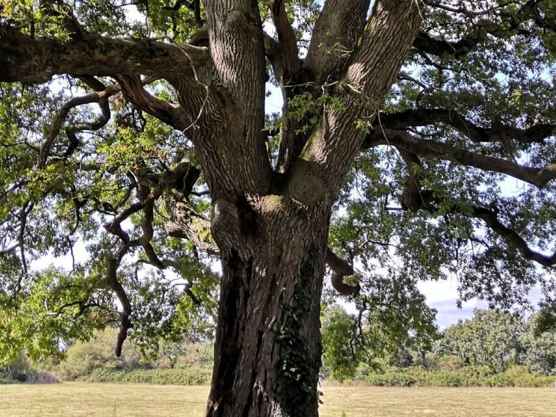 arbre développement personnel